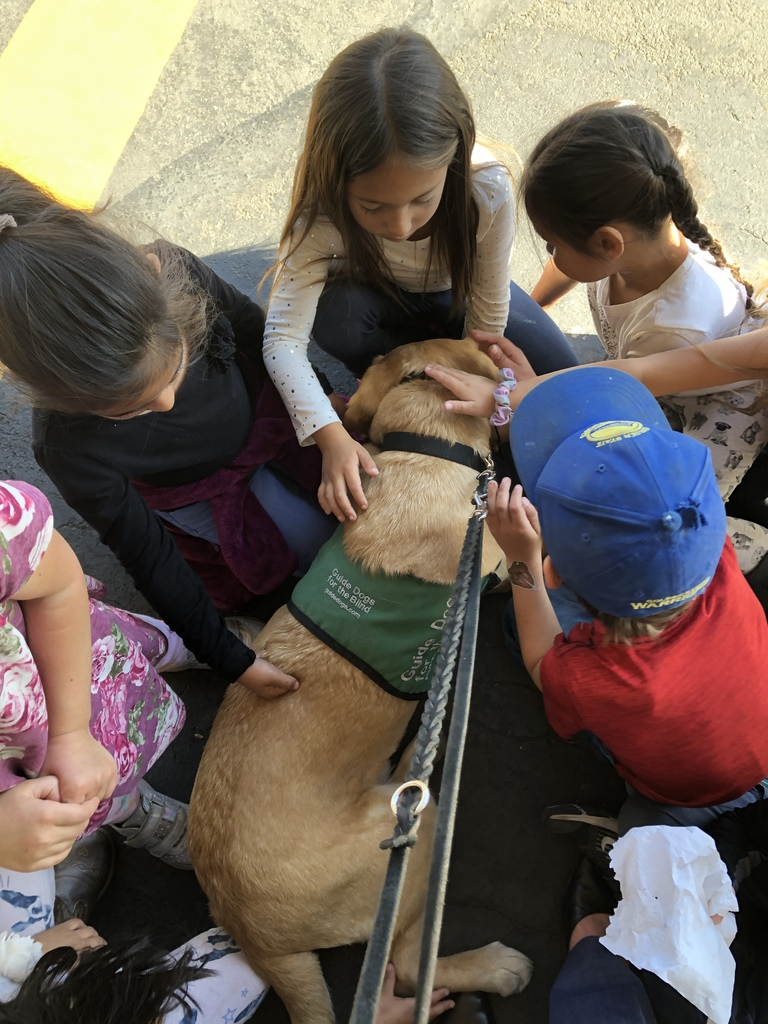 Students petting Guide Dog Puppy in Training, Throne.